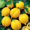 Photo: Tomate citron ('Lemon Tree')