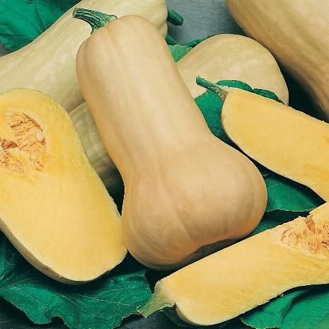 Photo: Courge Butternut